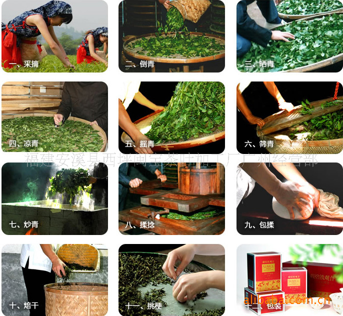 茶的制作步骤图片