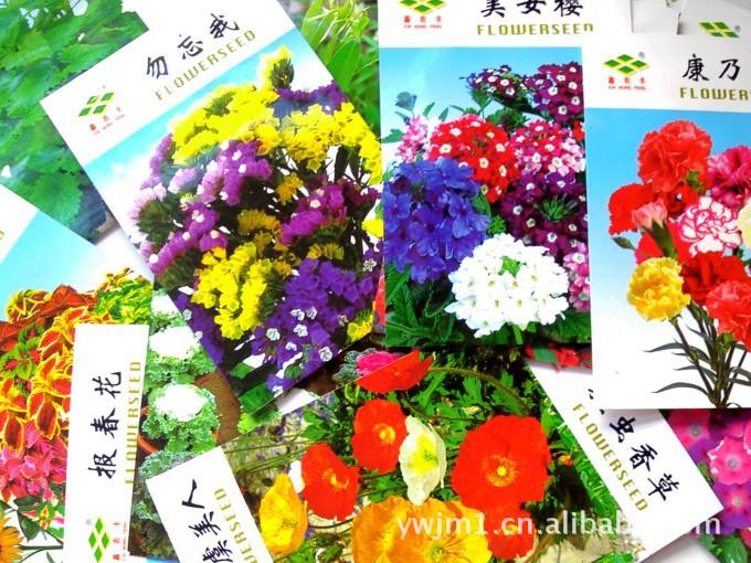 各种花卉种子批发 紫罗兰 勿忘我 凤仙花 薰衣草等各种花种子 子