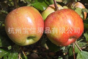 供应苹果 阿克苏冰糖心红富士苹果 量大从优(图)