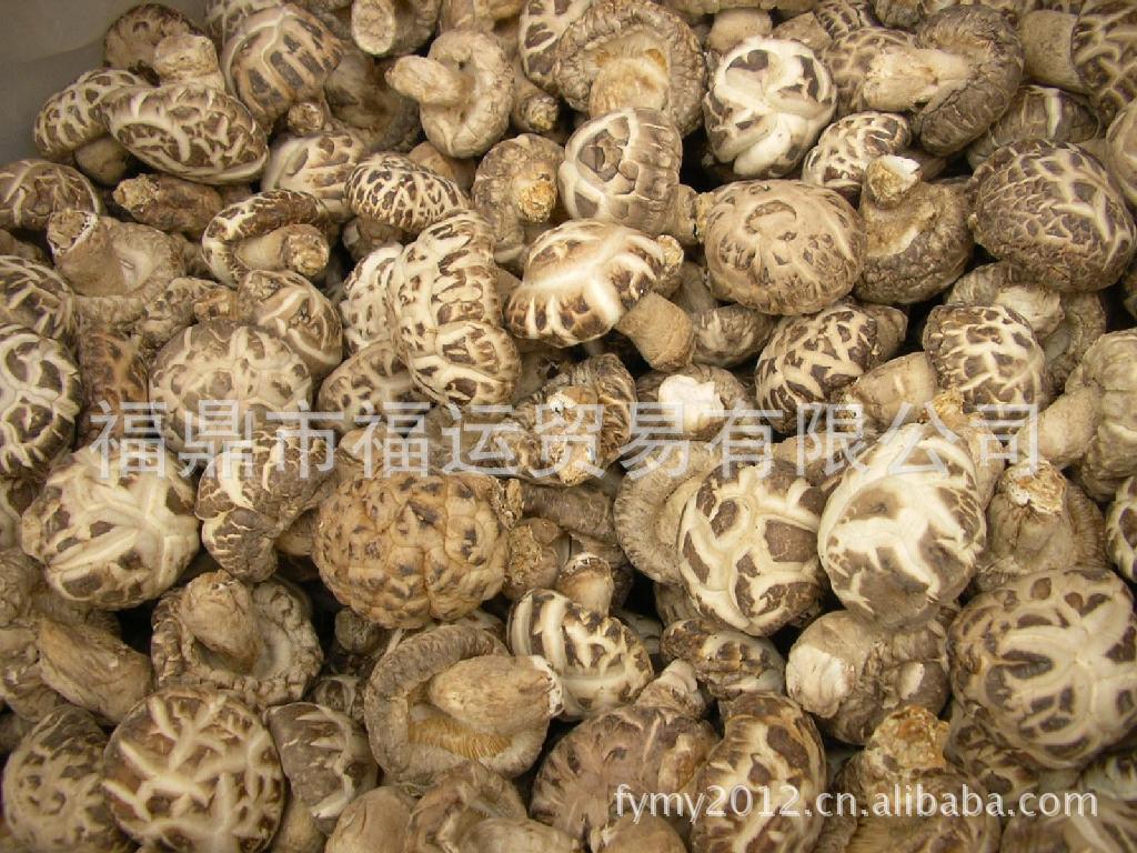 热销福建古田食用菌,农产品批发,花菇香菇