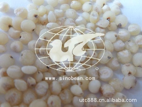 高粱米 高粱 白高粱米 红高粱米 健康食品  秫米 优质五谷杂粮
