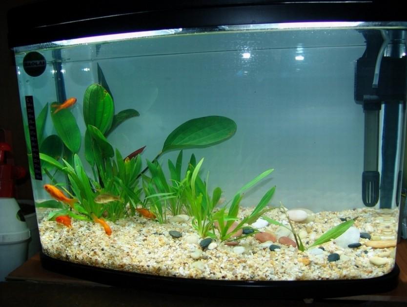 【金鱼缸鱼缸,玻璃玻璃,对缝光洁、表面精确、在cad比例尺上如何设置图片