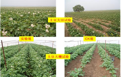 沙土土壤VS旱地土壤施肥区别