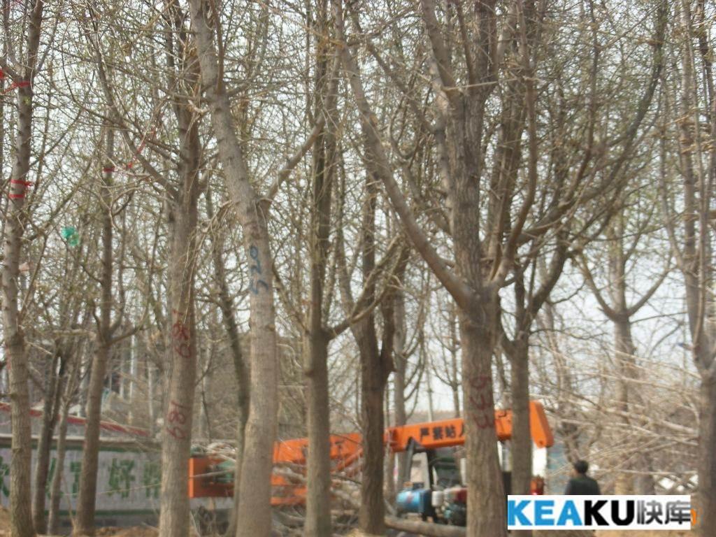 乔木,灌木 果树苗木图片