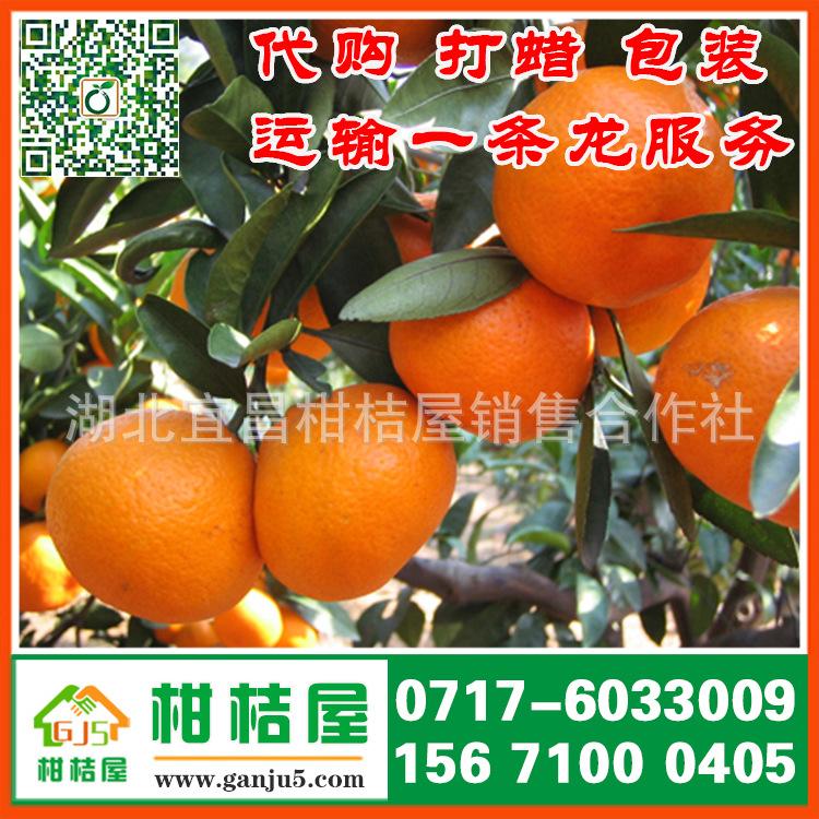 宜昌晚熟柑桔产物展现