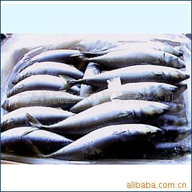 国产鲐鱿鱼|大连海鲜|大连水产